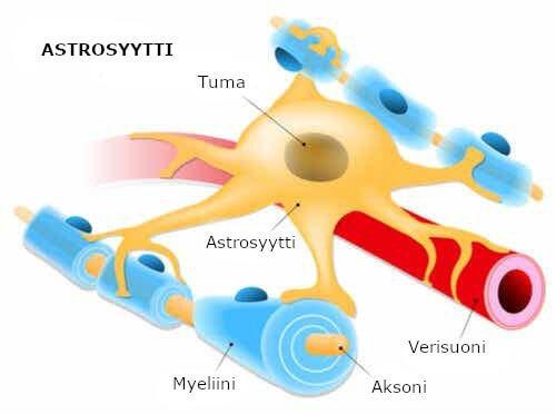 Astrosyytit