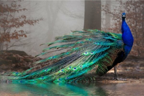11 maailman kauneinta eläintä